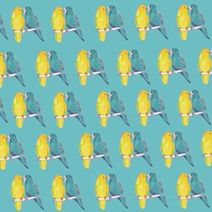 Budgie gift wrap